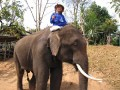 Mae Ping Elephant Camp near Chiang Mai in Northern Thailand Day 12 Feb 23-2006 (111)