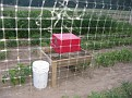 """Looking thru the 7 foot high """"deer netting"""".  Without this the deer would devastate my crops!!!"""