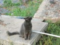 Scamp (or Marco Polo, as I called him when he was a kitten. He was very adventurous