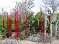 Arid Garden Red and Amber Reeds08