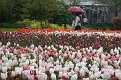 Keukenhof 2010 (67)