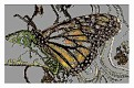 Butterfly @2009 R valerie jagiello