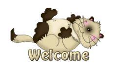 Welcome - KittySitUps
