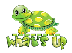 What's up - CuteTurtle