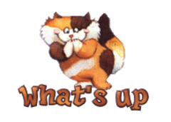 What's up - GigglingKitten