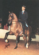 AQUAVITAE #180709 (Brusally Czesost x EW India, by *Bask++) 1978-1990 bay stallion bred by Gene LaCroix Jr; sired 4 registered purebreds