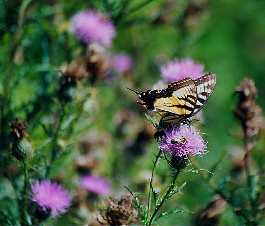 butterfly and bee 9 17 03