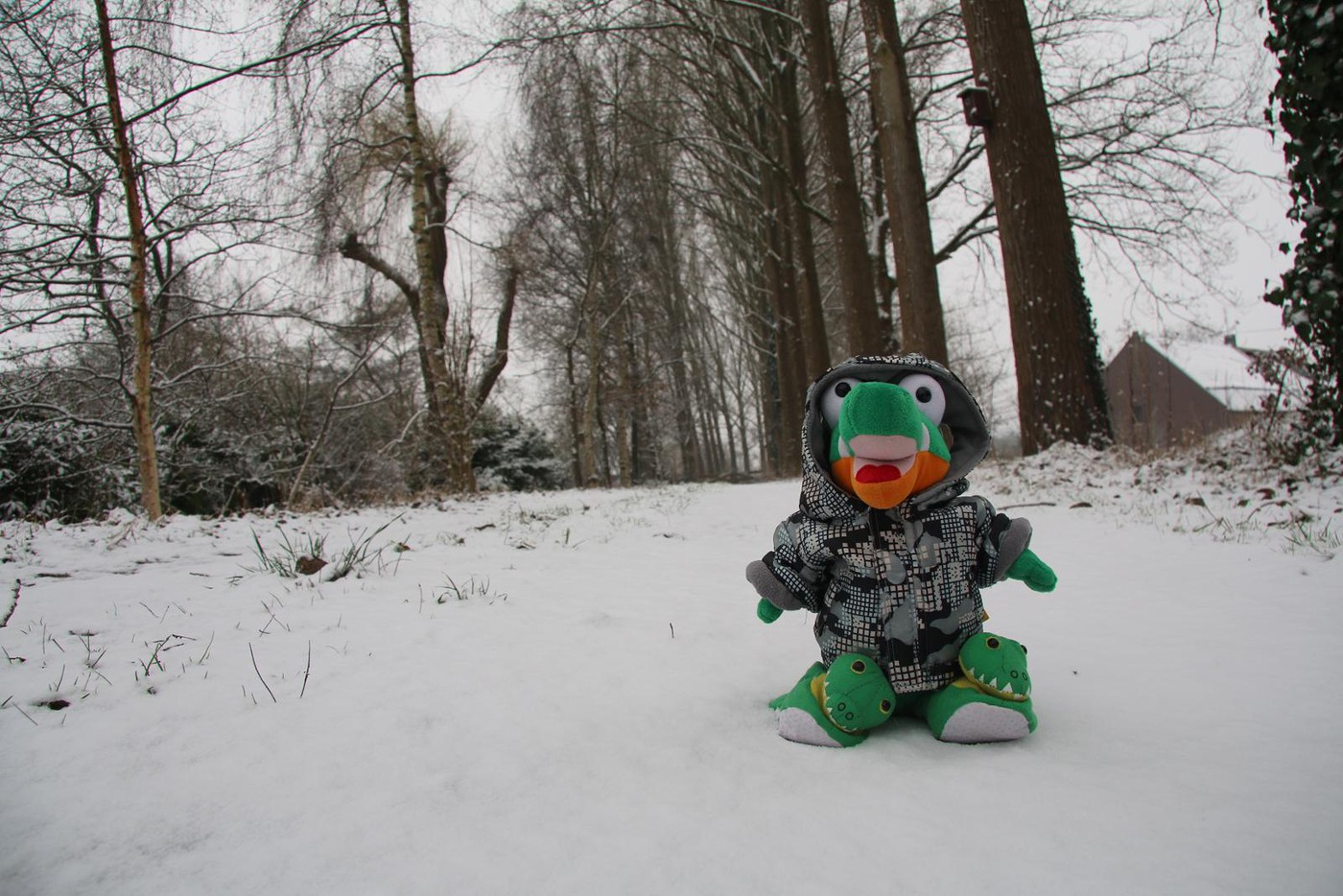 Sint Oedenrode 2017 February 11 Snow (10)