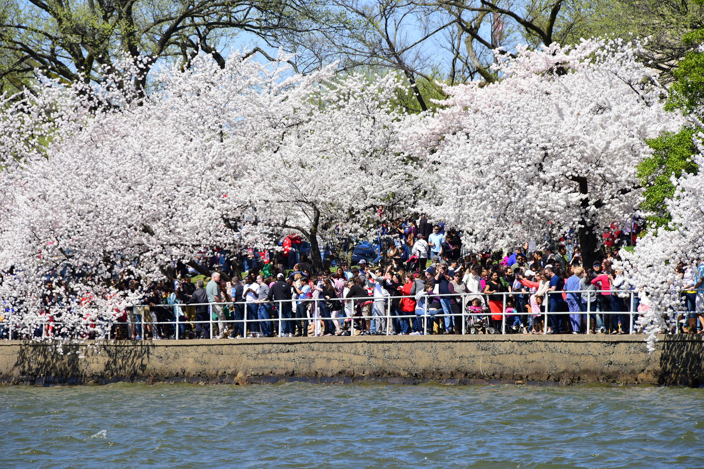 CherryBlossomFest APR2015 464