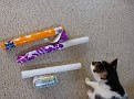Unpeeled, being peeled and peeled wands.  Can for scale, cat because you can't keep a cat out of a picture.