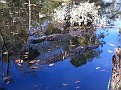 Erin & I Exploring Homosassa State Wildlife Park in Florida...