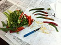 "Tuesday 11-13-2012 / Summer is Way Gone, but not the Hot Peppers!!!  I'm collecting the seeds from my favorite ones (Taiwan Long Hots) to dry for a week and then refrigerate to ""overwinter"" for next years crop :-)"