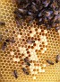 The Bees Survive...through and post Hurricane Sandy... Amazing...