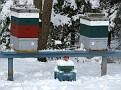 I brushed off all the snow off of the Honey Bee Hives and a few came out to see what was going on!!!  They keep the hive in the 90's F year round...  even in the cold of winter!!!