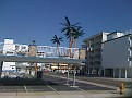 Wildwood Crest...  Palm trees stay there all year long / they are artificial '-)))