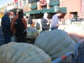 World Champion Pumpkin Contest, Byward market