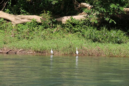 Port Antonio Rio Grande Rafting 2017 December 6 (78)