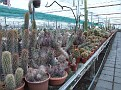 Nursery part of Cacti collection.