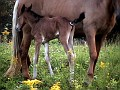 Brand new foal